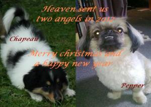 Wünsche Euch Besinnliche Weihnachten.Friendship For Dogs Wünscht Besinnliche Weihnachten Und Ein Frohes