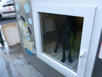 Hunde-Waschmaschine: keine Fluchtmöglichkeit, keine Sozialpartner.
