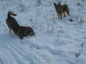 Hunde_Schnee