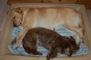 Mavie & Merle