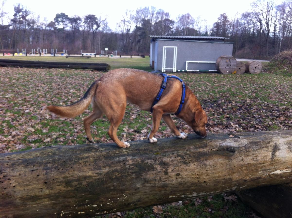 Warum Schlecktleckt Uns Unser Hund Ab Friendship For Dogs