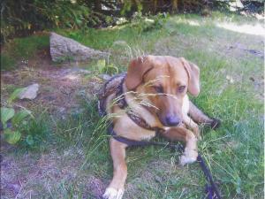 Emma entspannt nach einer Wanderung Schatten.